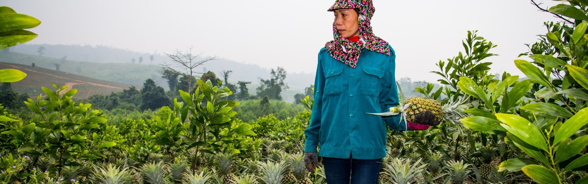 Smallholder pineapple farmer in Vietnam