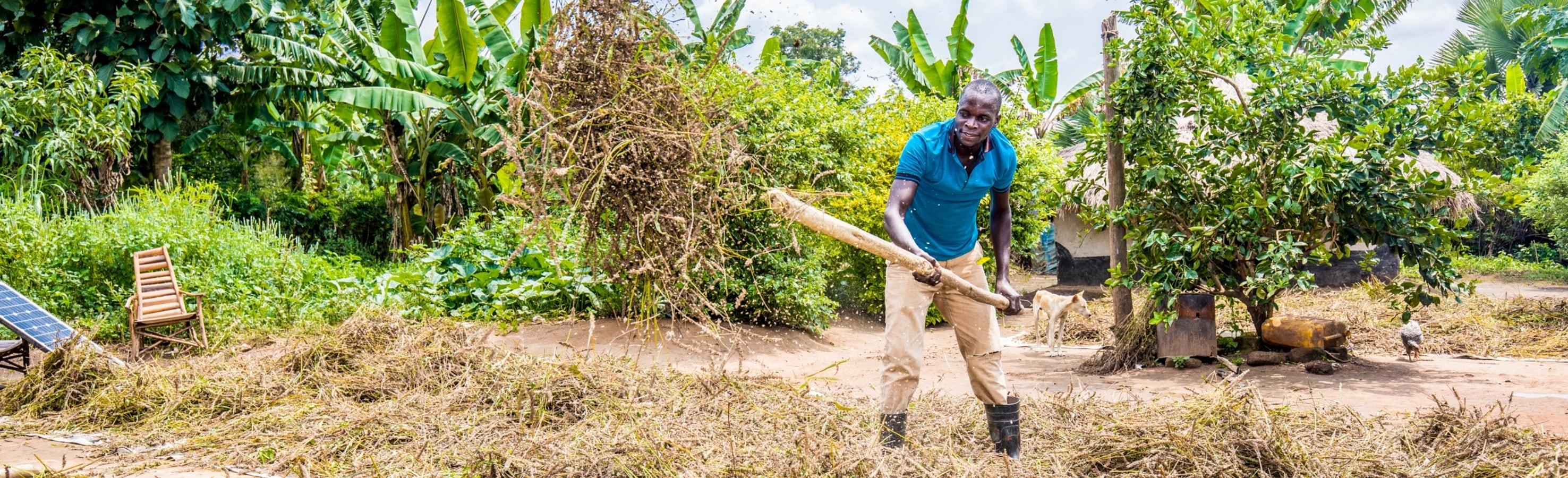 Smallholder farmer is harvesting in Africa