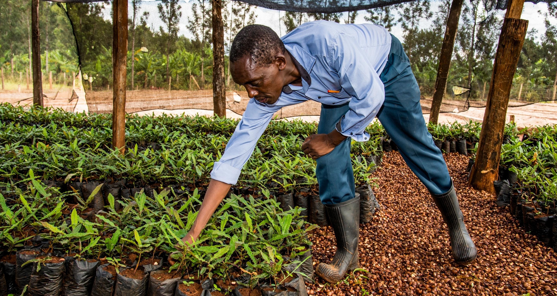 Coffee farmer in Africa