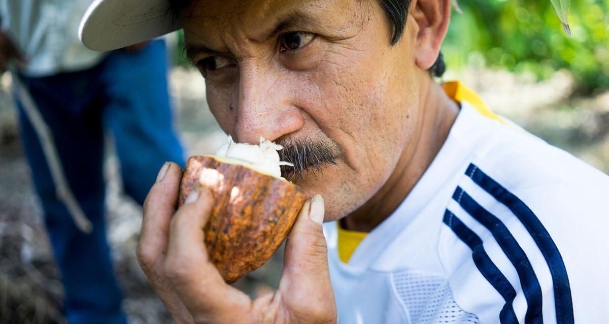 Cocoa farmer holds a cocoa bean