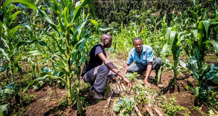 Smallholder maize farmers in Kenya