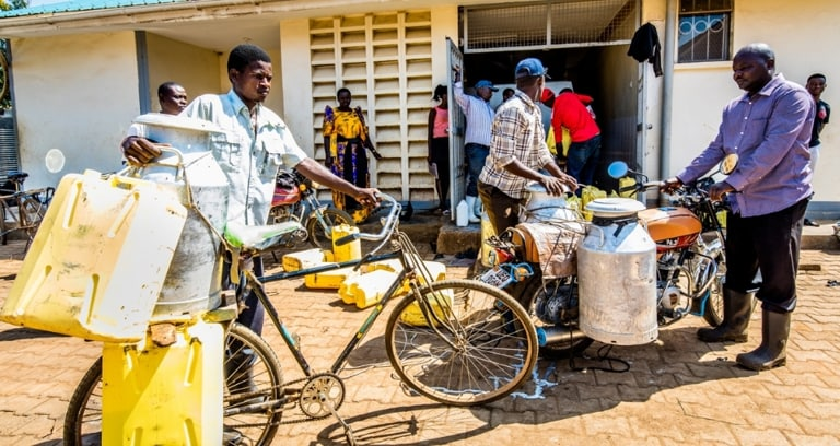 Smallholder dairy farmers deliver milk at cooperative