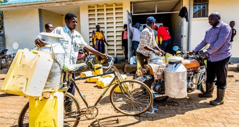 Smallholder dairy farmers deliver milk at cooperative