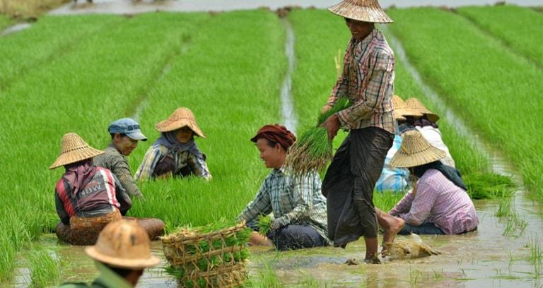 Smallholder farmers in field in Myanmar