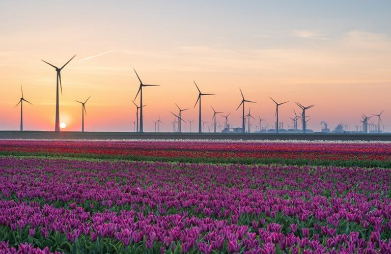 Nederland tulpen windmolens